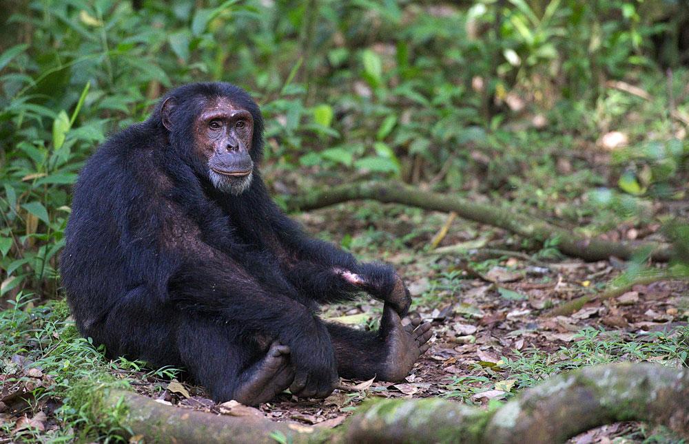 [Image: Kibale_Forest_National_Park_016.jpg]